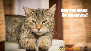 Rub Someone Up the Wrong Way 猫の習性が由来の英語イディオム