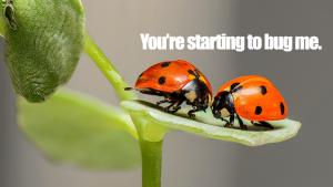Bug スラングで使う時の意味